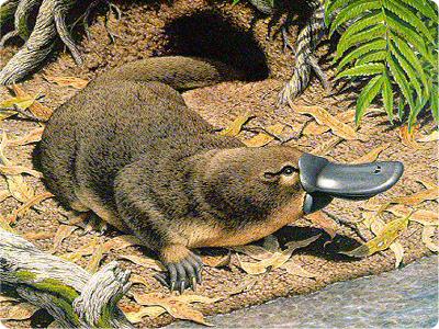 Are Platypus Mammals