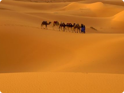 Which Is The Largest Desert Of The World Information Of The World - What is the largest desert in the world